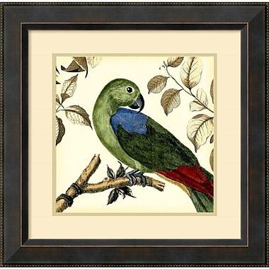 Amanti Art ? Impression encadrée « Tropical Parrot III » par Martinet, 23,38 haut. x 23,38 larg. (po) (DSW992154)