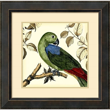 Amanti Art Tropical Parrot III Framed Art Print by Martinet, 23.38