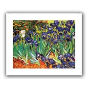 "ArtWall ""Irises in the Garden"" Rolled Canvas Art By Vincent Van Gogh, 24"" x 32"""