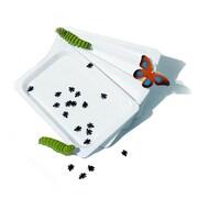 Fun Science Plastic Tray Set, 4/Set (FI-T08)