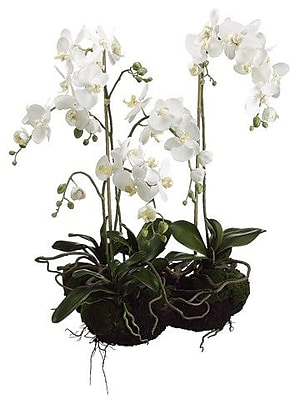 Tori Home 33'' Two Phalaenopsis Orchid Plant in White