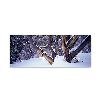 "Trademark David Evans ""Highcountry Snowgums"" Gallery-Wrapped Canvas Art, 10"" x 32"""