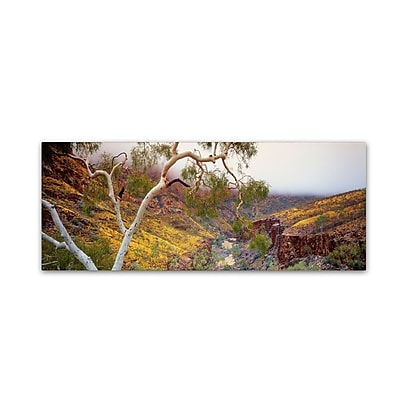"Trademark David Evans ""Ormiston Gorge-NT"" Gallery-Wrapped Canvas Art, 16"" x 47"""