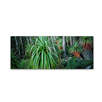 "Trademark David Evans ""Pandani Grove-Tas"" Gallery-Wrapped Canvas Art, 16"" x 47"""