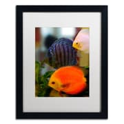 "Trademark Kurt Shaffer ""Multi-colored Discus"" Art, White Matte With Black Frame, 16"" x 20"""
