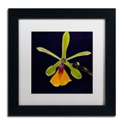 "Trademark Kurt Shaffer ""Orchid #1"" Art, White Matte With Black Frame, 11"" x 11"""