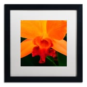 "Trademark Kurt Shaffer ""Brilliant Orchid on Fire"" Art, White Matte With Black Frame, 16"" x 16"""