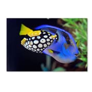 """Trademark Kurt Shaffer """"Colorful Tropical Fish"""" Gallery-Wrapped Canvas Art, 16"""" x 24"""""""