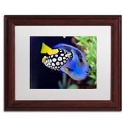 "Trademark Kurt Shaffer ""Colorful Tropical Fish"" Art, White Matte With Wood Frame, 11"" x 14"""
