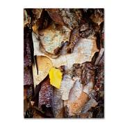 "Trademark Kurt Shaffer ""Birch Leaf"" Gallery-Wrapped Canvas Art, 35"" x 47"""