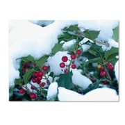 "Trademark Kurt Shaffer ""Holly in the Snow"" Gallery-Wrapped Canvas Art, 35"" x 47"""
