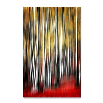 "Trademark Philippe Sainte-Laudy ""Osmosis"" Gallery-Wrapped Canvas Art, 22"" x 32"""