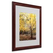 "Trademark Philippe Sainte-Laudy ""Yellow Fall"" Art, White Matte With Wood Frame, 16"" x 20"""