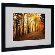 "Trademark Philippe Sainte-Laudy ""Autumn Leaves"" Art, White Matte With Black Frame, 16"" x 20"""