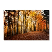 """Trademark Philippe Sainte-Laudy """"Autumn Leaves Pathway"""" Gallery-Wrapped Canvas Art, 22"""" x 32"""""""
