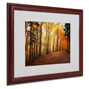 """Trademark Philippe Sainte-Laudy """"Autumn Leaves"""" Art, White Matte With Wood Frame, 16"""" x 20"""""""