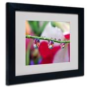 "Trademark Steve Wall ""Boquet in a Drop"" Art, White Matte W/Black Frame, 11"" x 14"""