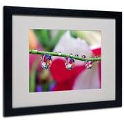 "Trademark Steve Wall ""Boquet in a Drop"" Art, White Matte W/Black Frame, 16"" x 20"""