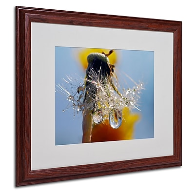 "Trademark Steve Wall ""Dandy Drops 3"" Art, White Matte W/Wood Frame, 16"" x 20"""
