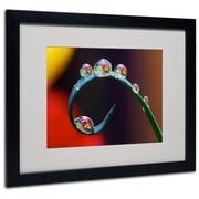 "Trademark Steve Wall ""Hidden Worlds in Water Drops"" Art, White Matte W/Black Frame, 16"" x 20"""