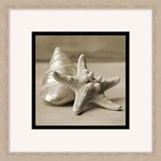 """Layered Shells Framed Art, 18"""" x 18"""""""
