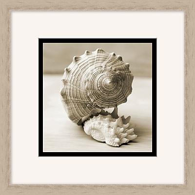 Layered Shells 2 Framed Art, 18
