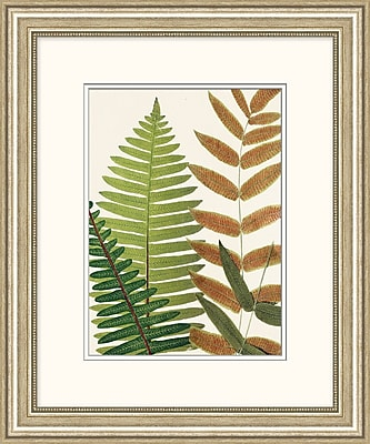 Natures Fern 2 Framed Art, 20
