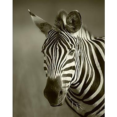 Zebra Canvas Art, 22