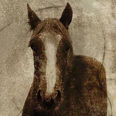Horse 2 Framed Art, 24
