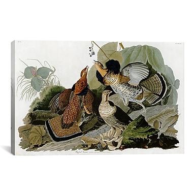 iCanvas 'Ruffed Grouse' by John James Audubon Graphic Art on Canvas; 18'' H x 26'' W x 0.75'' D