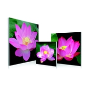 Artistic Bliss Water Lilies 3 Piece Framed Photographic Print Set