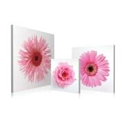 Artistic Bliss Gerbera Flowers 3 Piece Framed Photographic Print Set