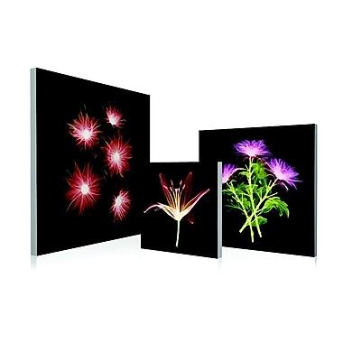 Artistic Bliss Fluorescent Flowers 3 Piece Framed Photographic Print Set