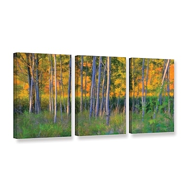ArtWall Stumpy Basin by Antonio Raggio 3 Piece Photographic Print on Wrapped Canvas Set
