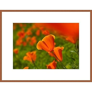 Printfinders 'California Poppies' by John Nakata Framed Photographic Print