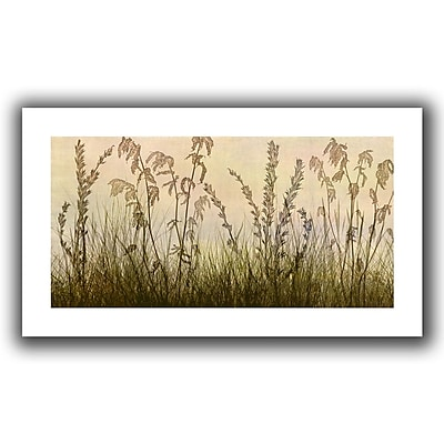 ArtWall Wildflowers Amber' by Cora Niele Graphic Art on Rolled Canvas; 28'' H x 52'' W