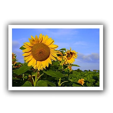 ArtWall Sunflower' by Lindsey Janich Photographic Print on Rolled Canvas; 28'' H x 40'' W