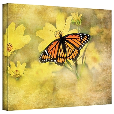 ArtWall Butterfly in Yellow' by Antonio Raggio Photographic Print on Canvas; 14'' H x 18'' W