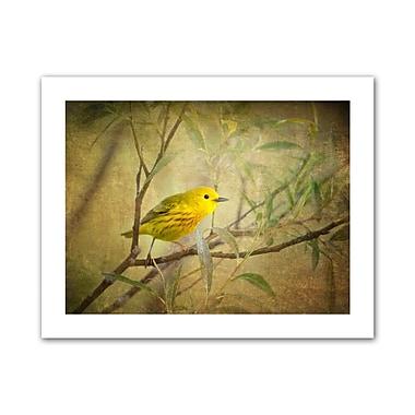 ArtWall Bird on Branch' by Antonio Raggio Graphic Art on Rolled Canvas; 22'' H x 28'' W