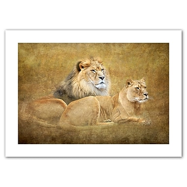 ArtWall Lions' by Antonio Raggio Photographic Print on Rolled Canvas; 16'' H x 22'' W