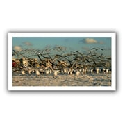 ArtWall Crazy Birds, Siesta Key' by Lindsey Janich Photographic Print on Rolled Canvas