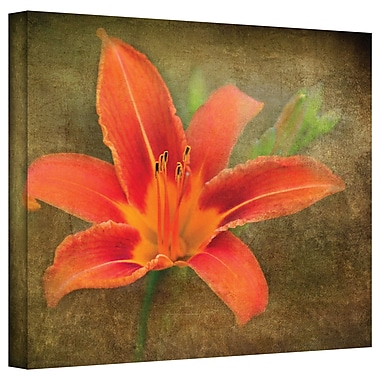 ArtWall Flowers in Focus' by Antonio Raggio Photographic Print on Canvas; 36'' H x 48'' W