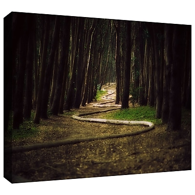 ArtWall 'Trees' by John Black Photographic Print on Wrapped Canvas; 16'' H x 24'' W