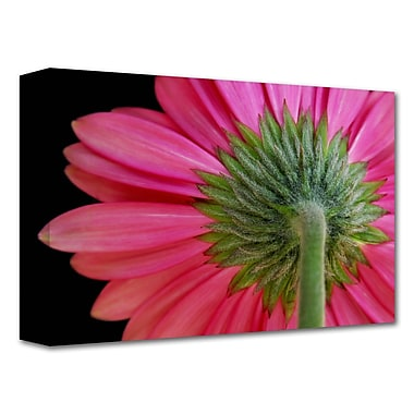 ArtWall 'Shy Flower' by Dan Holm Photographic Print on Wrapped Canvas; 12'' H x 18'' W
