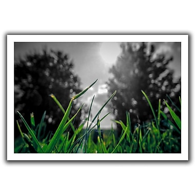 ArtWall Grass' by John Black Photographic Print on Rolled Canvas; 20'' H x 28'' W