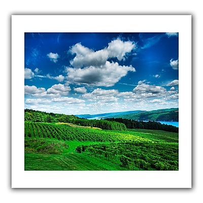 ArtWall Vineyard and Lake' by Steven Ainsworth Photographic Print on Rolled Canvas; 16'' H x 22'' W
