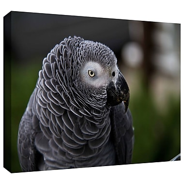 ArtWall 'Parrot' by Lindsey Janich Photographic Print on Wrapped Canvas; 16'' H x 24'' W