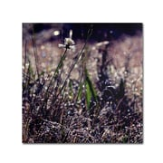"Trademark Fine Art BC0142-C1818GG ""Purple Morning"" by Beata Czyzowska Young 18"" x 18"" Frameless Art"