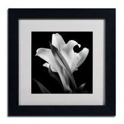 "Trademark Fine Art ALI0289-B-MF ""Lily"" by Michael Harrison Framed Art, White Matted"