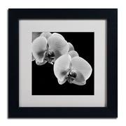 "Trademark Fine Art ALI0293-B-MF ""Orchids"" by Michael Harrison Framed Art, White Matted"
